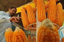 Kementan tularkan empat kunci sukses ekspor jagung