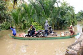 Banjir di Pandeglang, 75 hektare padi puso