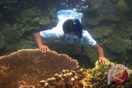 Perairan Pemuteran Bali surga penyelam dunia