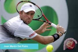 Del Potro ke final Sydney International