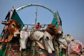 Rakyat Pakistan belanjakan jutaan dolar selama Idul Adha