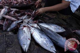 Ekspor ikan kayu ke Jepang makin intens