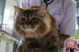 Wanita Siberia bunuh suami demi lindungi kucing