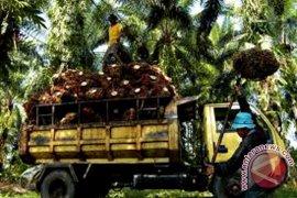 Harga CPO Jambi naik Rp169 per kilogram