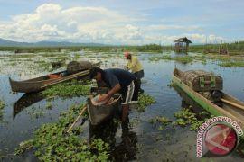 Eceng gondok tutupi 70% Danau Limboto