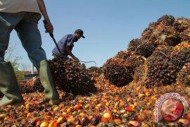 Harga CPO Jambi naik Rp109 per kilogram