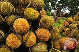 Durian pendapatan alternatif petani Bengkulu