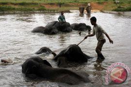 Warga penyangga Taman Nasional Way Kambas dilatih tangani konflik gajah