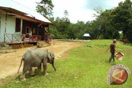 Habitat satwa liar Bengkulu kritis