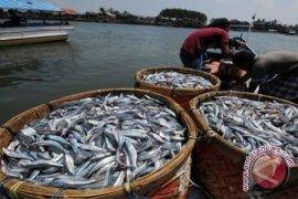 Harga ikan laut di Bengkulu melonjak tajam