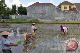 Lahan pertanian Bantul susut 10 hektare tiap tahun