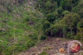 Walhi : 60 persen hutan Babel kritis