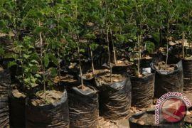 Ribuan pohon gayam ditanam di Rawa Pening