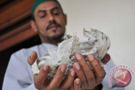 Indonesia dukung China promosikan sarang walet