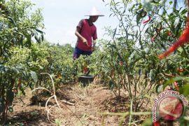 Waykanan dorong pemuda terjun ke pertanian