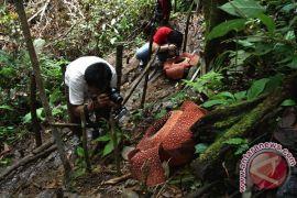 Bunga Rafflesia menjadi inspirasi koreografi