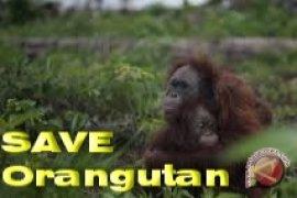 Pembantai Orangutan Divonis Delapan Bulan Penjara