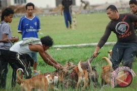 Petani basmi hama babi dilarang gunakan listrik