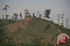 Walhi tantang kemenhut bongkar perusahaan perambah hutan