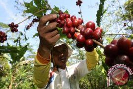 Kopi komoditas ekspor potensial Indonesia ke Taiwan