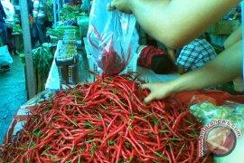 Harga Cabai Merah Naik Tipis Di Bengkulu