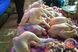Harga Daging Ayam Di Mukomuko Bertahan Tinggi