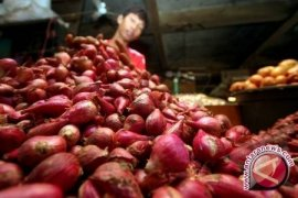 Distan Sambas Dorong Petani Kembangkan Bawang Merah