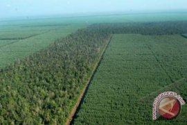 Artikel - Menatap Potret Hutan Indonesia