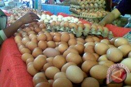 Harga telur ayam di Sleman turun