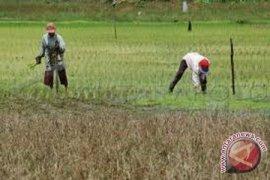 Kementan apresiasi program pertanian Kubu Raya