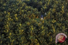 DPRD Ancam Cabut Izin Perusahaan Sawit
