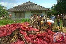 Karantina Pontianak Musnahkan 20 Ton Bawang Merah