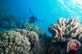 Pumpunan - Penyelamatan Terumbu Karang Kunci Kelestarian Laut