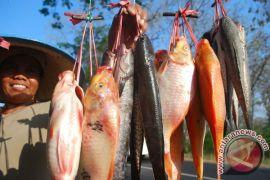 Ikan gurame bisa diganti dengan nila