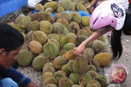 Petani Bengkulu kembangkan durian unggul Bentara