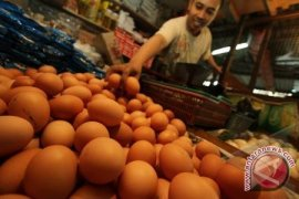 Dinas Peternakan Kalbar Jual Telur Murah