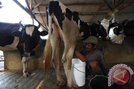 Konsumsi susu masyarakat Indonesia masih rendah