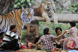 Pramuka dan mahasiswa layani pengunjung Kebon Binatang Ragunan