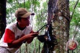 Disbun Kaltim remajakan Karet 100 Hektare