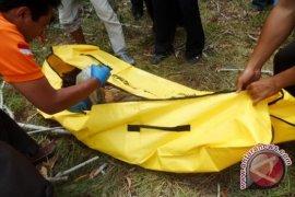 Gajah ngamuk tewaskan seorang mahasiswa Bengkulu