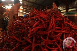 Cabai merah picu inflasi di Kota Bengkulu