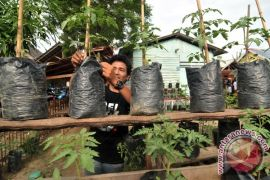 Sawahlunto canangkan Kawasan Rumah Pangan Lestari