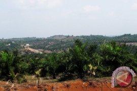 Pelepasan ribuan hektare hutan disinyalir untuk tambang dan perkebunan