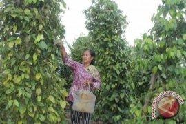 Nilai ekspor nontimah Babel ke India naik