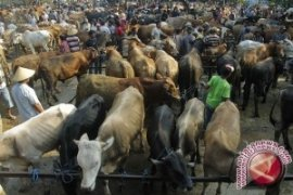 Balikpapan Siapkan 3.000 Ekor Hewan Kurban