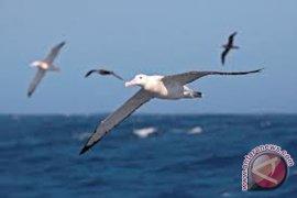 Komunitas gelar sensus burung air di pesisir Bengkulu