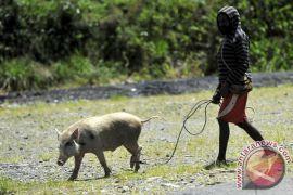 30,66 persen penduduk Papua miskin