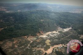 Revolusi hijau percepat pemulihan lahan kritis Kalsel