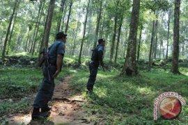 BLH: Penghijauan Hutan Lindung Masih Terbatas