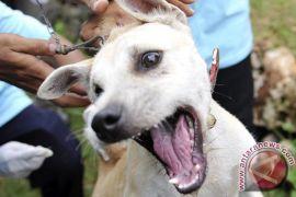 Warga Sumbar tertular rabies dirujuk ke Singapura